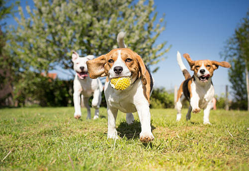 Pitch in for a Dog Park