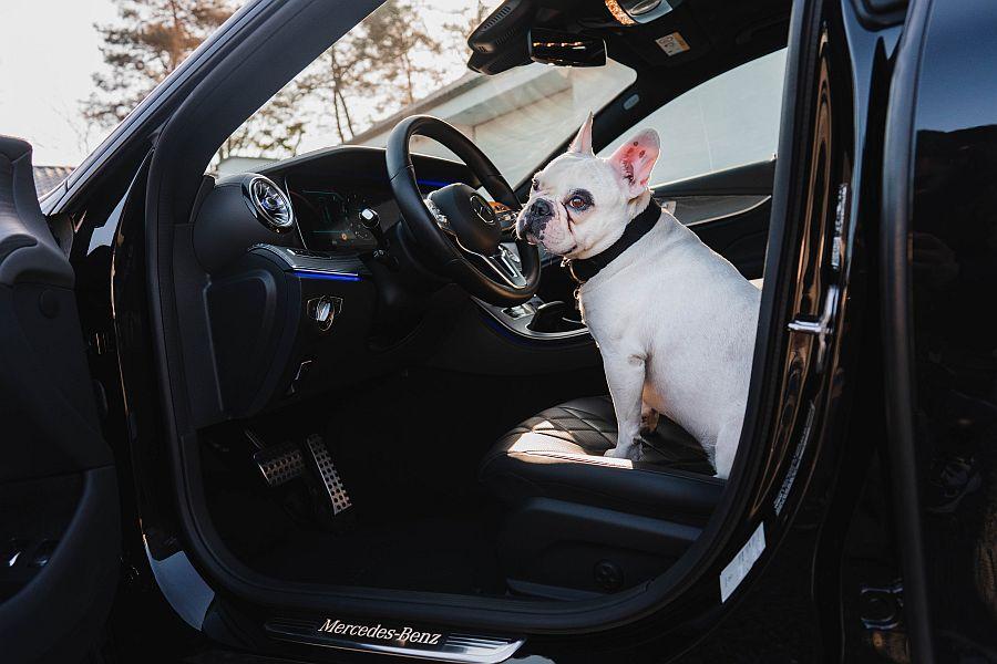 dog in car heat