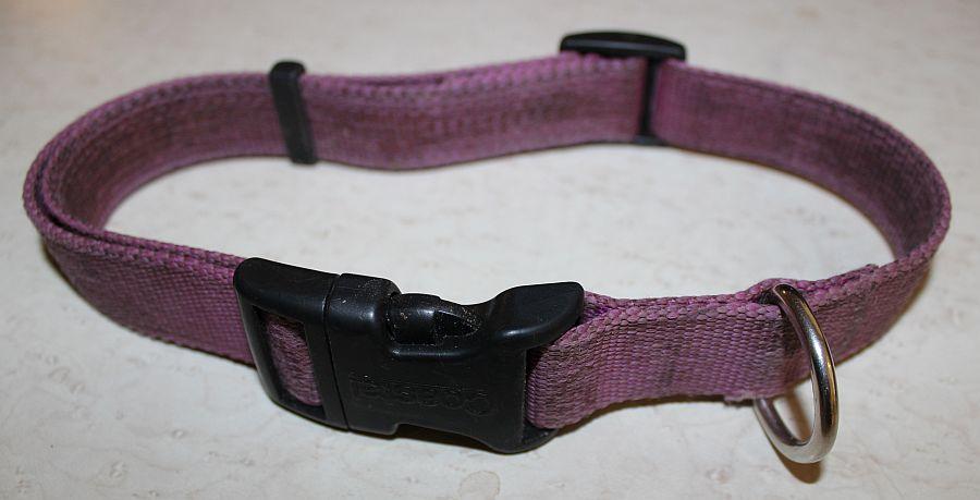 trainig tools flat collar