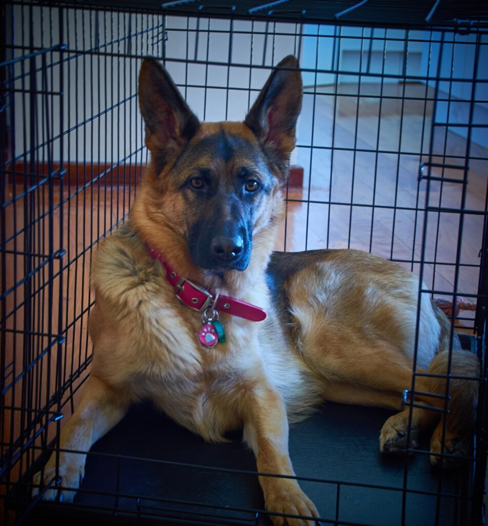 dog in crate kennel training