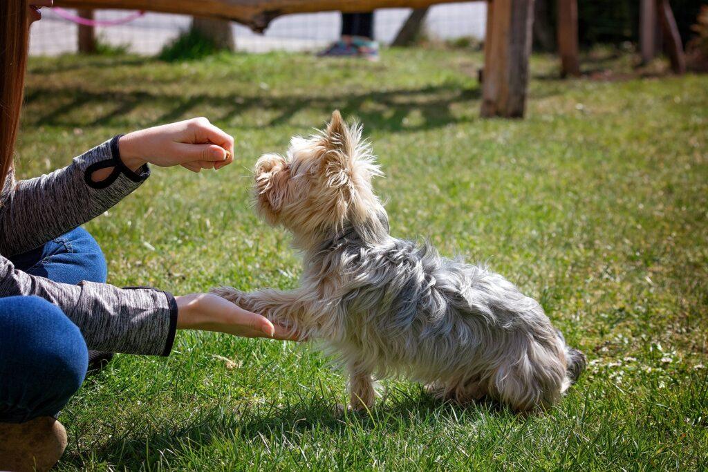 training dog to shake
